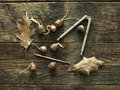 Acorns on weathered wood some a few dried leaves and a nutcracker and pick Stock Photography