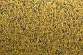 Acoustic sponge texture Royalty Free Stock Photo