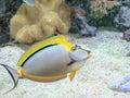 Acquarium fish Royalty Free Stock Images