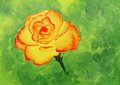 Acrylic painting beautiful reddish orange rose Royalty Free Stock Image