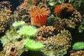 Y coral 5