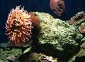 Y coral 6