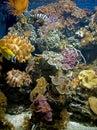 Y coral 8