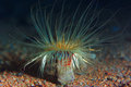 Actinium animal underwater photo Royalty Free Stock Photo