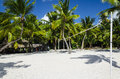 Active recreation on the caribbean islands volleyball pith golden sand by palm trees Royalty Free Stock Image