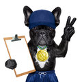 Active sport dog as gym trainer with gold medal making peace and winner signs with fingers holding a clipboard Stock Photos