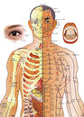 Acupuncture Chart - Chinese Medicine Stock Photography