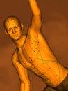 Acupuncture model M-POSE Vfm-7-6, 3D Model