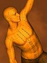 Acupuncture model M-POSE Vfm-7-7, 3D Model