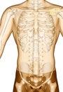 Acupuncture point Drawing ST13 Qihu, 3D Illustration