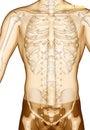 Acupuncture point Drawing ST10 Shuitu, 3D Illustration