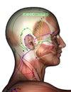 Acupuncture Point GB13 Benshen, 3D Illustration