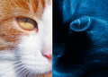 Acute eyesight health and medicine concept portrait of the red cat in the day and night Royalty Free Stock Photography