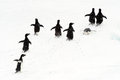 Adélie Penguins running on ice. Royalty Free Stock Photo