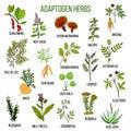 Adaptogen herbs. Hand drawn set of medicinal plants Royalty Free Stock Photo