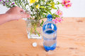 Add some soda into vase to keep cut flowers fresher along with water Royalty Free Stock Images