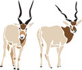Addax stylized antelope color illustration Stock Photography