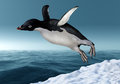 Adelie penguin leaping from the snow towards an icy ocean Royalty Free Stock Images