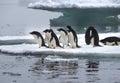 Adelie Penguins on Ice Floe in Antarctica Royalty Free Stock Photo