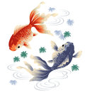 Admiration fish i painted a with a writing brush i described it in traditional japanese technique Royalty Free Stock Image