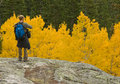Admiring The Aspens Royalty Free Stock Photo