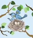 Admiring the Nest