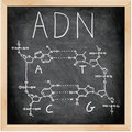 ADN - DNA in Spanish, French and Portuguese. Royalty Free Stock Image
