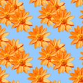 Adonis. Seamless pattern texture of flowers. Floral background,