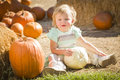 Adorable baby girl holding a pumpkin at the pumpkin patch in rustic ranch setting Royalty Free Stock Photography