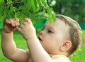Adorable baby girl picking ashberry Royalty Free Stock Photography