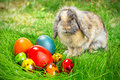 Adorable bunny easter eggs grass Royalty Free Stock Photo
