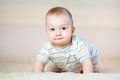 Adorable crawling baby boy indoors Royalty Free Stock Photo