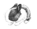 Adorable cute bunny rabbit drawing in black and white pen hand drawn sketch illustration is pointillism art design for easter pet Stock Photo