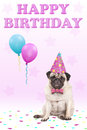 Adorable cute grumpy faced pug puppy dog with party hat, balloons, confetti and text happy birthday, on pink background Royalty Free Stock Photo