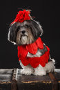 Adorable dog dressed with red hearts and big red rose flower ribbon bow Royalty Free Stock Photo