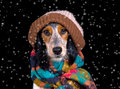 Adorable dog with hat in the snow Royalty Free Stock Photo