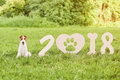 Adorable happy fox terrier dog at the park 2018 new year greetin Royalty Free Stock Photo