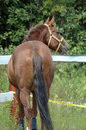 Adorable horse Royalty Free Stock Photo