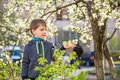 Adorable kid boy portrait in blooming cherry garden, walking outdoor. child exploring flowers on bloom tree Royalty Free Stock Photo