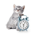 Adorable kitten with alarm clock on white Stock Photography