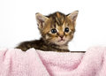 Adorable kitten looking so cute Stock Photos