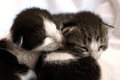 Adorable kittens two newly born laying on bed Stock Photos