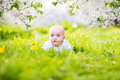 Adorable little baby boy in blooming apple garden Royalty Free Stock Photo