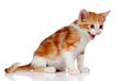 Adorable little cat angry Royalty Free Stock Photo