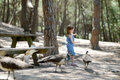 Adorable little girl feeding peacocks and cats Royalty Free Stock Photos