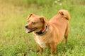 Adorable mongrel dog in the park a sunny day Stock Photos