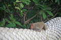 Adorable monkey relaxing on banister dragon skin of thai temple Stock Photo