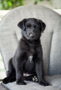 Adorable puppy black little sitting Stock Photos