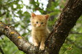 Adorable red kitten climbing the tree branch Royalty Free Stock Photo