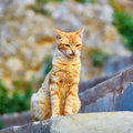 Adorable red tabby cat on a street in medina of chefchaouen morocco small town in northwest morocco known for its blue buildings Royalty Free Stock Images